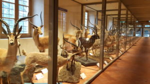 Natural History Museum of Calci